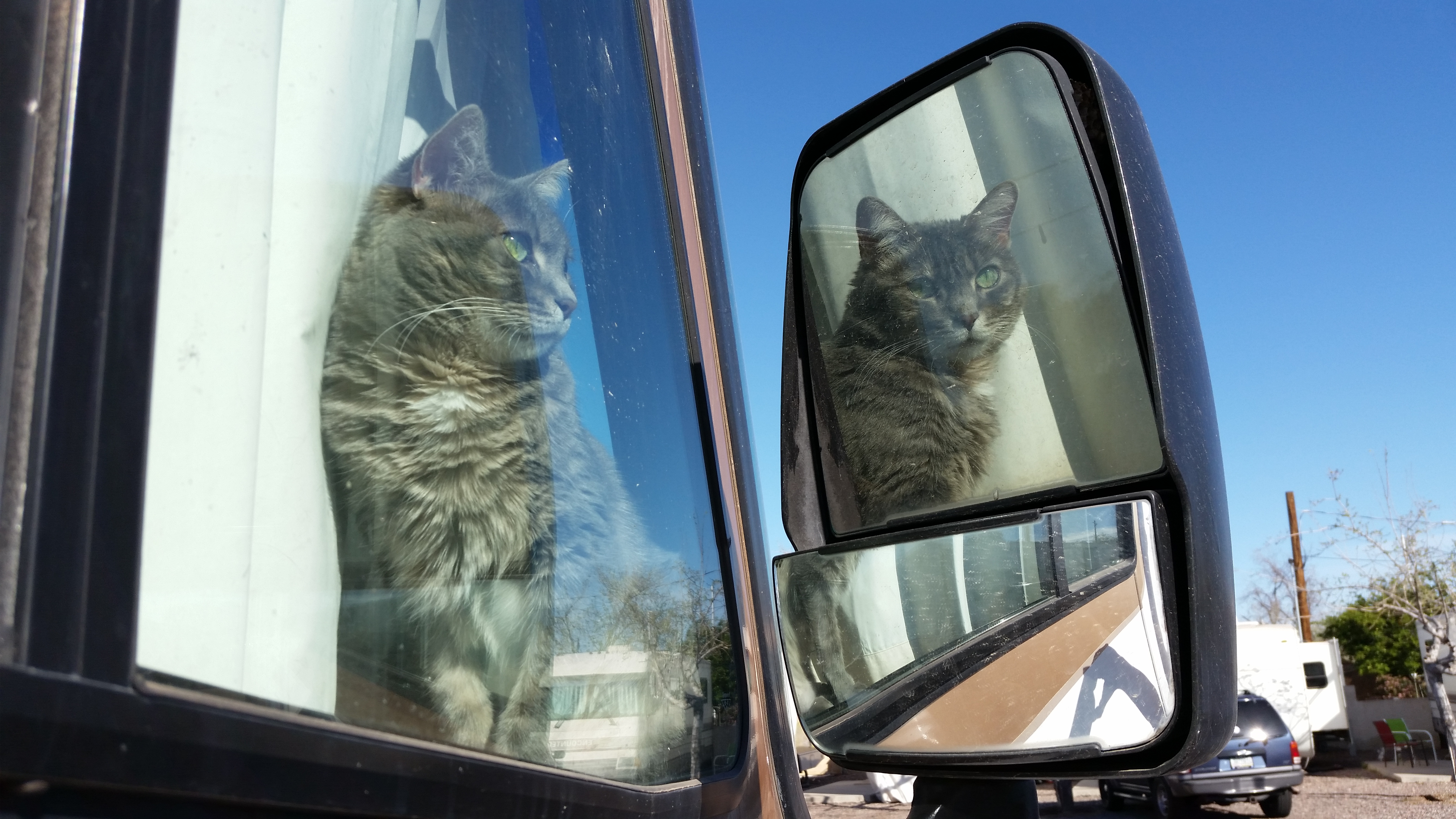 RV travelling with Cats!