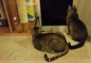 watching cat TV