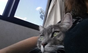 riding on the human's lap